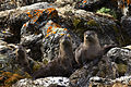 12th Place - American River Otters (7420210046).jpg