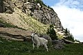 2006-08-01 - 05 - Road Trip - Day 09 - United States - Montana - Waterton-Glacier International Peac 4888740499.jpg