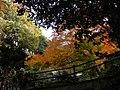 2010-11-29 紅葉 - panoramio.jpg