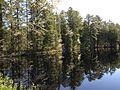 2013-05-10 09 55 45 View east across Pakim Pond from the northern end of the Pakim Pond picnic area in Brendan T. Byrne State Forest.jpg