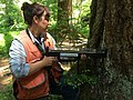 2015. Forest pathologist Betsy Goodrich using a Resistograph to measure the amount of sound rind in an old growth Douglas-fir. Ohanapecosh Campground, Mt. Rainier National Park, Washington. (38201968944).jpg