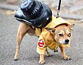 2015 Hallowenn dog costume party 9.jpg