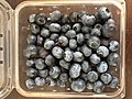 2019-03-10 23 00 34 An open carton of Fresh Results blueberries from Chile in the Franklin Farm section of Oak Hill, Fairfax County, Virginia.jpg