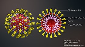 3D medical animation corona virus-ar.jpg