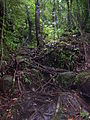 774MA - Bako Nationalpark unser Weg.JPG