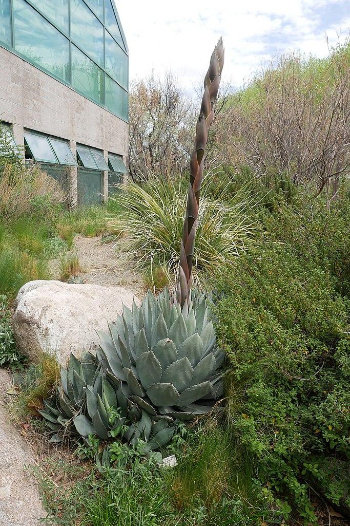 File:ABQ BioPark Botanic Garden 2018 (22).jpg - Wikimedia Commons