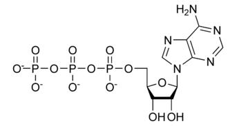 Tyrosine kinase - Image: ATP chemical structure