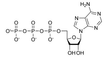 Den kemiske struktur af adenosintrifosfat