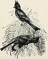 A - birding on a bronco (1896) (14755082322).jpg