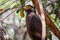 A Bird in Wilpattu National Park 14.jpg