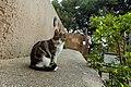 A feral cat in Malaga-2.jpg