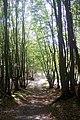 A footpath in The Grove - geograph.org.uk - 1526778.jpg