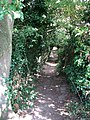 A narrow shaded path - geograph.org.uk - 1465218.jpg