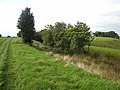 A section of Vallum near Irthington - geograph.org.uk - 983221.jpg