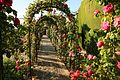 Aa rose trellis in generalife.jpg