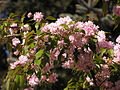 Ab plant 1651.jpg