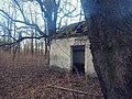 Abandoned Forest House (201062991).jpeg