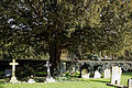 Abbess Roding - St Edmund's Church - Essex England - churchyard at east with yew tree.jpg