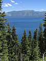Abies concolor Emerald Bay Lake Tahoe.jpg