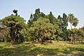 Acharya Jagadish Chandra Bose Indian Botanic Garden - Howrah 2011-01-08 9806.JPG