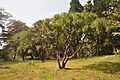 Acharya Jagadish Chandra Bose Indian Botanic Garden - Howrah 2011-01-08 9810.JPG