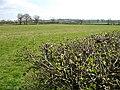 Across the Fields - geograph.org.uk - 395131.jpg
