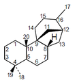Afidicolano - Numeración.png