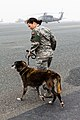 Air Force K-9 unit trains with 42nd CAB aviatiors 140110-Z-CQ136-059.jpg