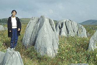 Akiyoshidai Quasi-National Park - Karst pinnacles at Akiyoshidai