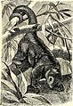 All about animals. Facts, stories and anecdotes (1900) (14798288453).jpg