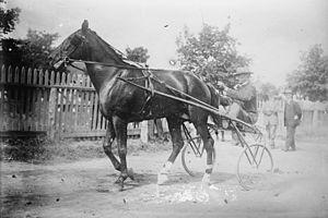 Readville Race Track - Allan Winter 1908