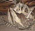 Allosaurus vs. Camptosaurus.jpg