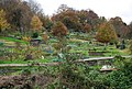 Allotments in the Ferndale area of Tunbridge Wells - geograph.org.uk - 1045676.jpg