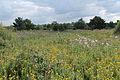 Alner's Gorse Butterfly Reserve.jpg