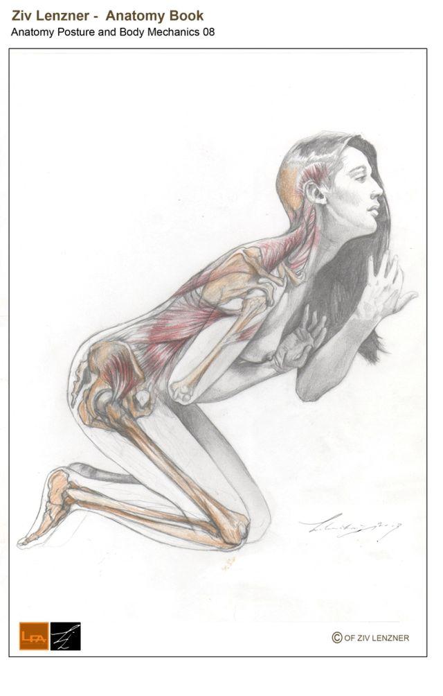 Sauropod neck posture - Wikiwand