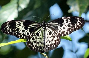 Mount Harriet National Park -  Andaman tree nymph