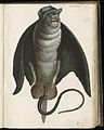 Animal drawings collected by Felix Platter, p1 - (136).jpg
