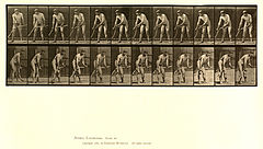 Animal locomotion. Plate 391 (Boston Public Library).jpg