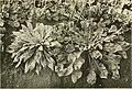 Annales du Jardin botanique de Buitenzorg (18221178688).jpg