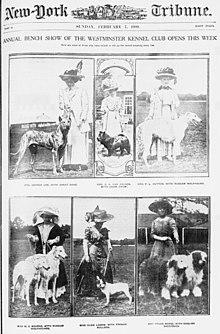о некоммерческих организациях клубов собаководства