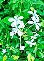 Anoop Sai Kashyap -blue blossoms akNrQ2td.jpg