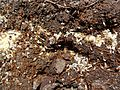 Ant nests 02.jpg