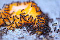 Ants On Cheese - Photo by D. Sharon Pruitt.jpg