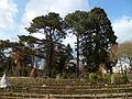 Arbres du parc du Thabor (mars 2012).JPG