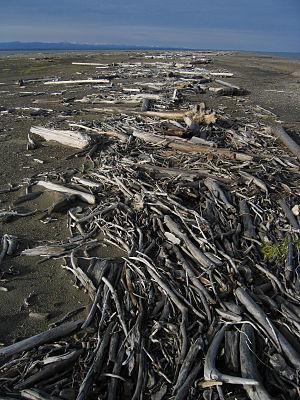Arey Island - Driftwood on Arey Island