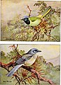 Articles about birds from National geographic magazine ((19-?)-(193-?)) (20613402019).jpg