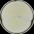 Aspergillus bisporus meaox.png