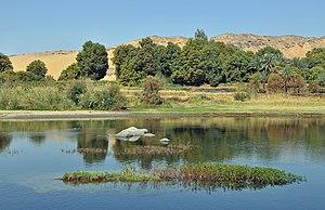 Wildlife of Egypt - Vegetation beside the Nile near Aswan
