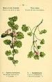 Atlas de poche des plantes des champs, des prairies et des bois (PLATE 33) (6022554180).jpg