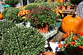 Autumn Display at Garden Shop - 50494729033.jpg